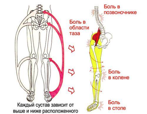 Влияние плоскостопия на другие мышцы в ноге