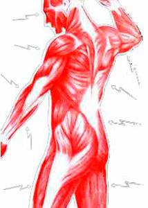 Воспаление мыщц